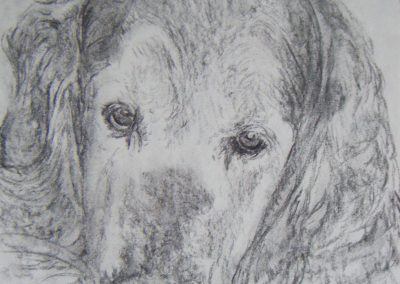 Shadow-11-x14-Charcoal-Retriever-